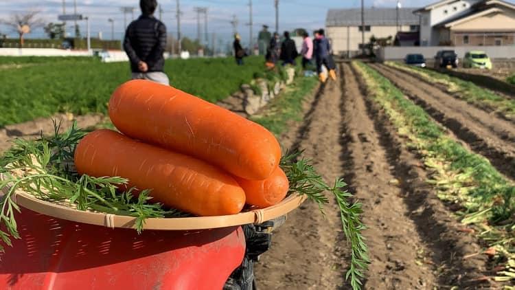 【AgriBus-GMini活用事例】資材コストの圧縮に成功~加藤農場~